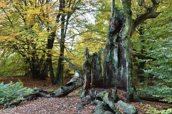 dead tree in autumn
