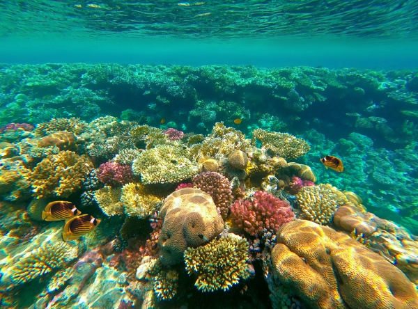 underwater, world., coral, fishes, of, red - 28998285