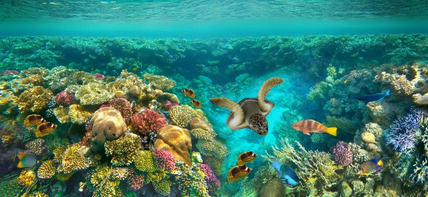 underwater, world., coral, fishes, of, red - 28998287