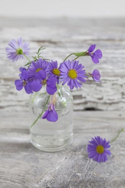 nostalgic flower still life with