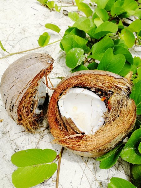 coco nut shell on thailand beach