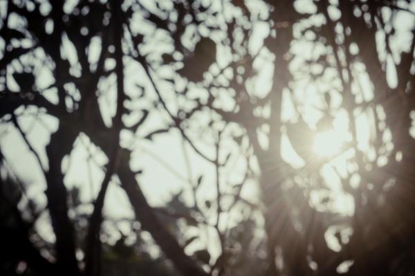 morning sunlight through tree leaves blur