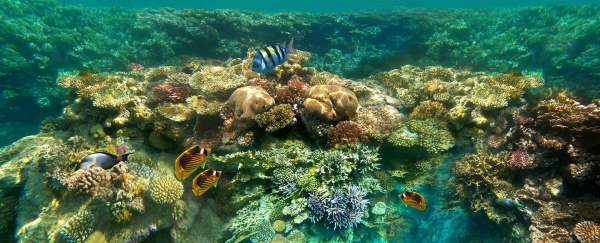 underwater, world., coral, fishes, of, red - 29020938