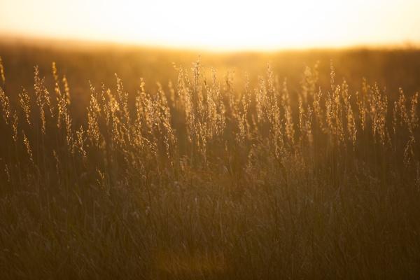 usa south dakota prairie grass field