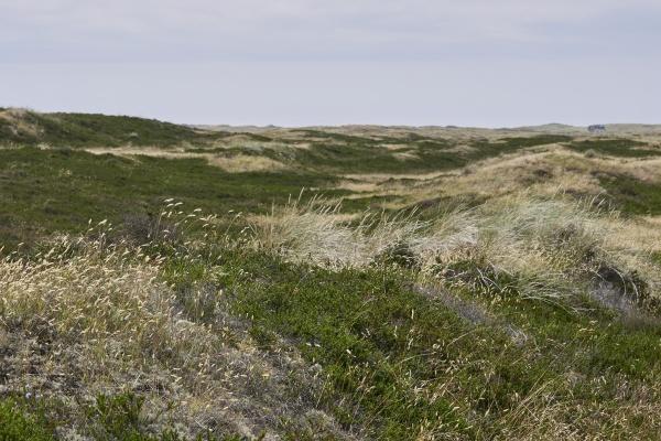 list at sylt island