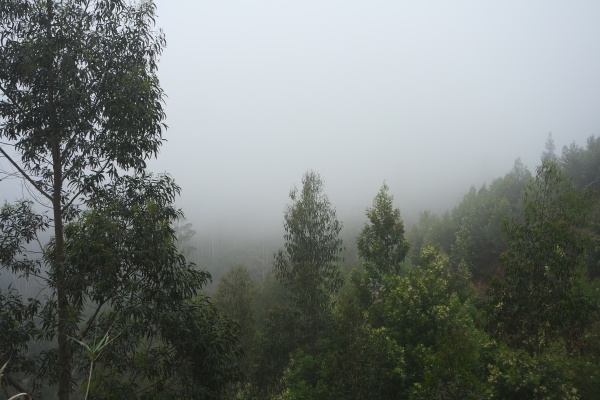 fog in the mountains madeira