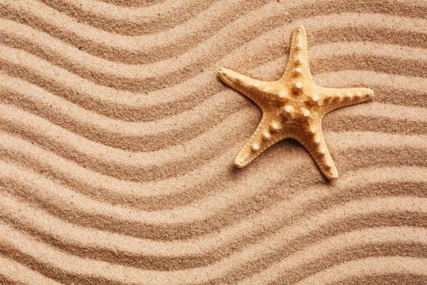 beautiful starfish on sand and warm
