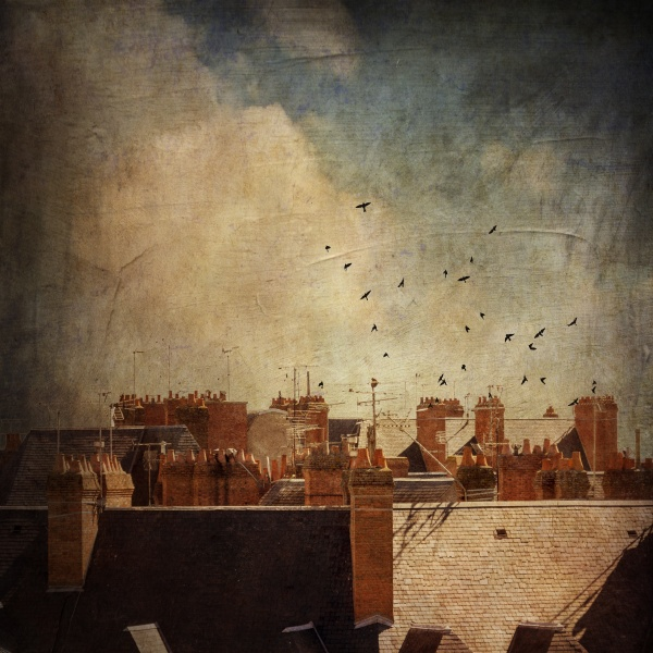 france blois roofs and flock of