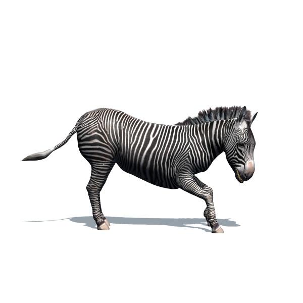 wild animals zebra with shadow