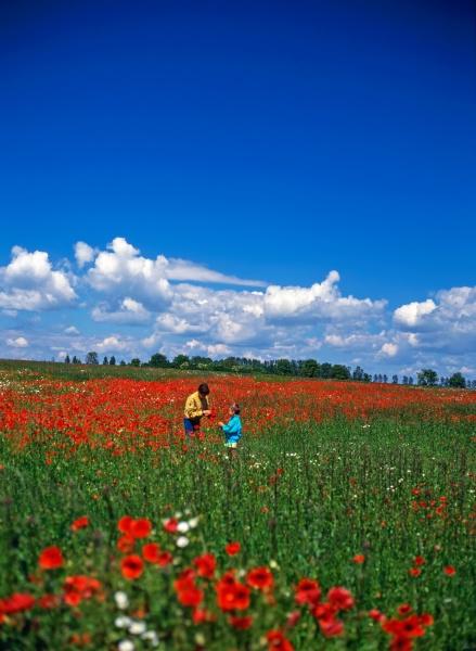 kids in poppy field