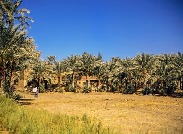 oasis egypt
