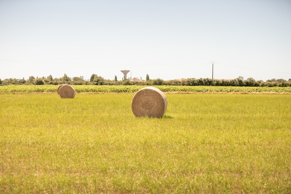 hay bale in a meadow next