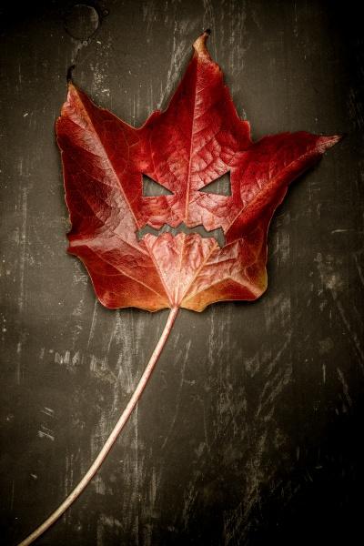 halloween monster concept foliage leaf on