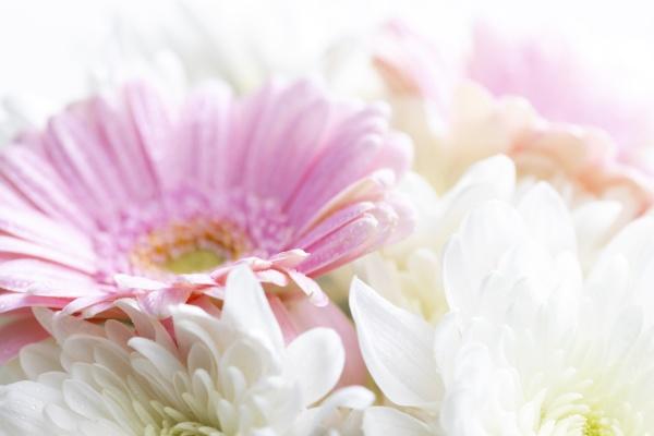 still, life, of, flowers, on, white - 29263318