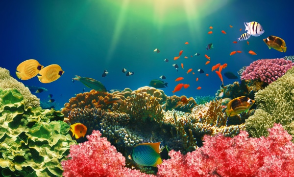 underwater, world., coral, fishes, of, red - 29273520