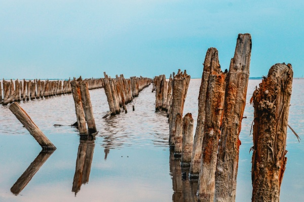 wooden logs stand in sea water
