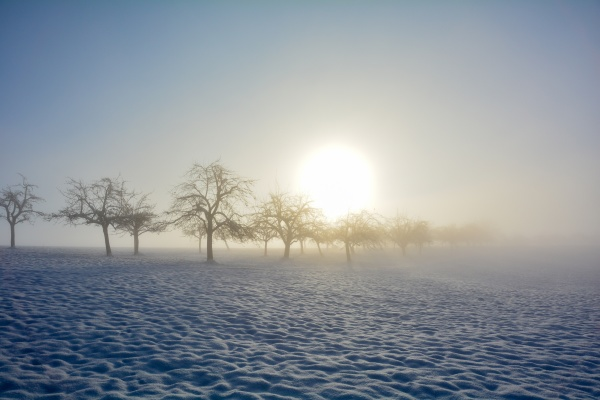 trees at sunrise with snow and
