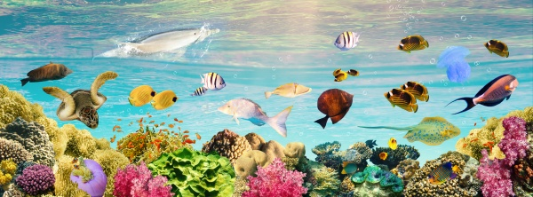 underwater, world., coral, fishes, of, red - 29322134
