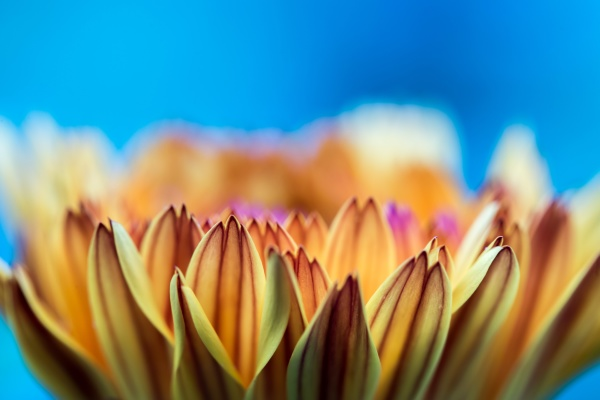 beautiful flower petals close up
