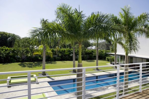 palm trees along a swimming pool