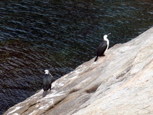 gull or seagull a seabird