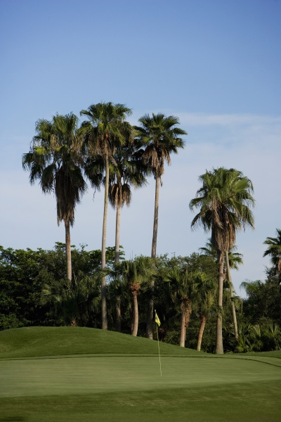 palm trees in a golf course