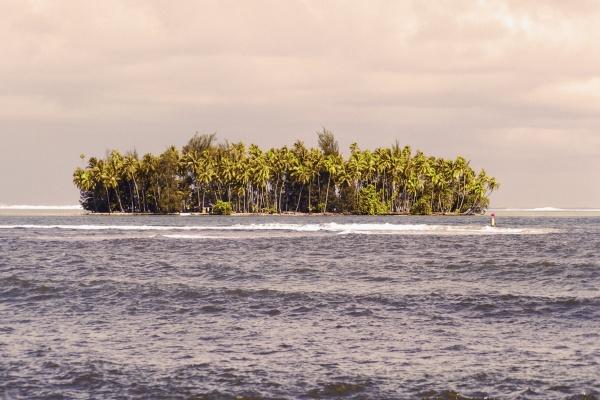 trees on an island tahiti society