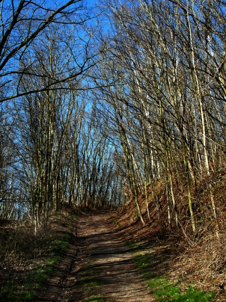 deister forest in the springtime