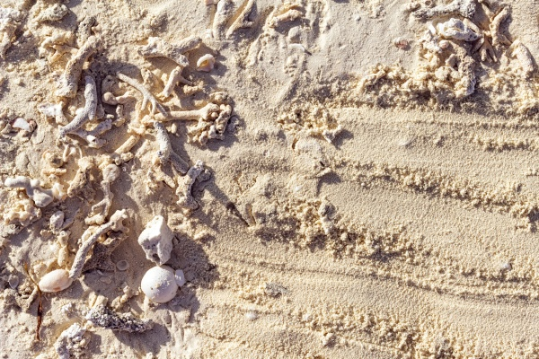 maldives sand background with shells corals