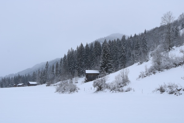 snow, covered, forest, and, small, chalet - 29673580