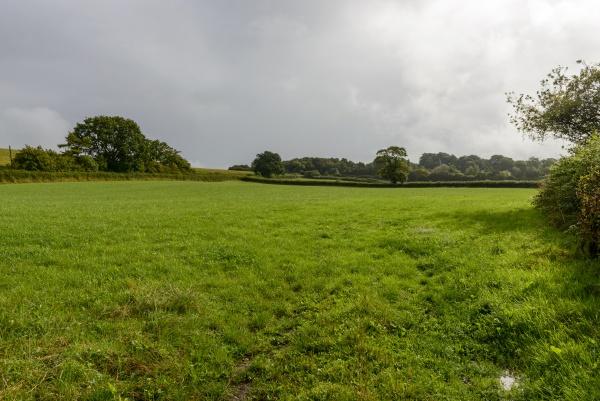 glade in dorset countryside near yeovil