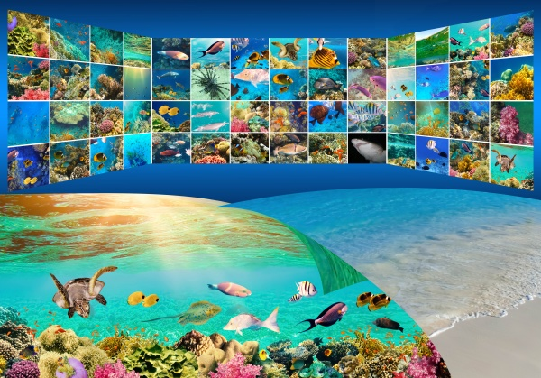 underwater, world., coral, fishes, of, red - 29690039