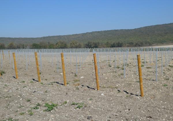 vineyards in the hills