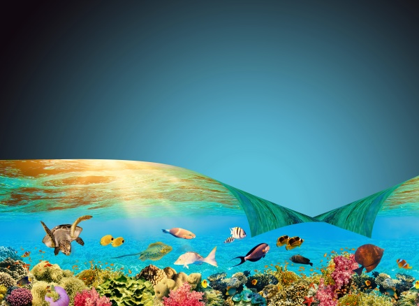 underwater, world., coral, fishes, of, red - 29692935