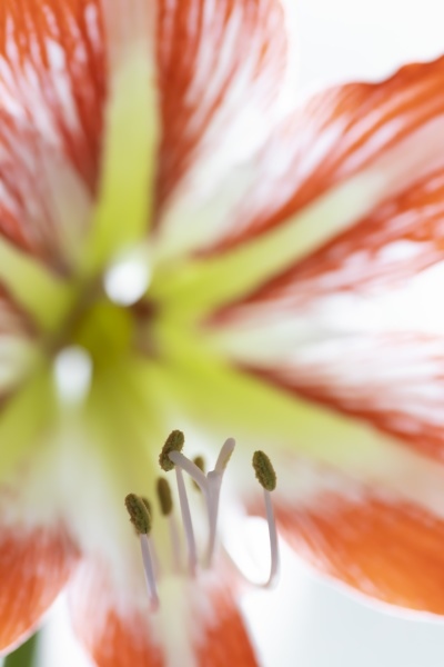 close up of red and white