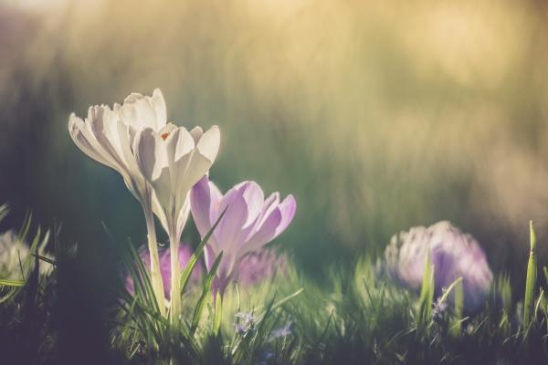 springtime spring flowers in sunlight
