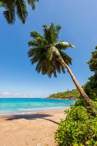 anse major beach mahe island
