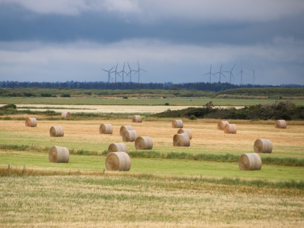 landscape with round straw bales and