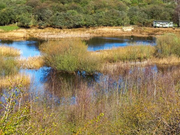 wetland habitat at fairburn ings west