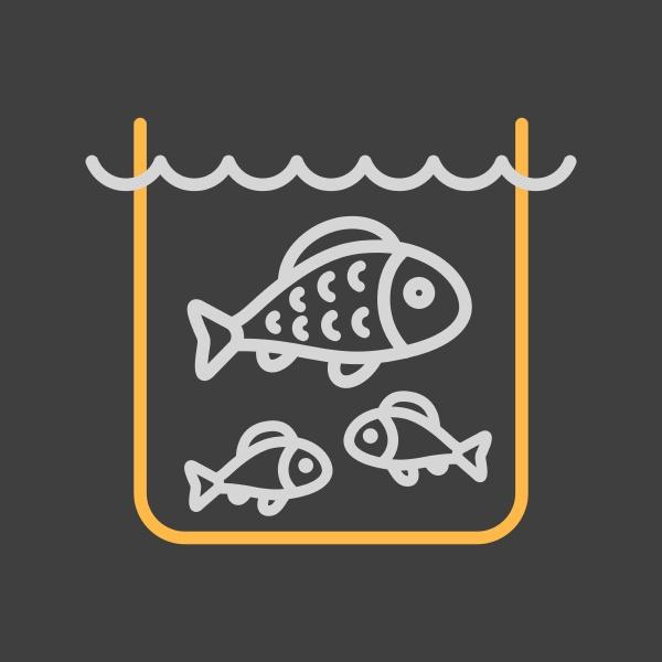 fish in a pond or aquarium