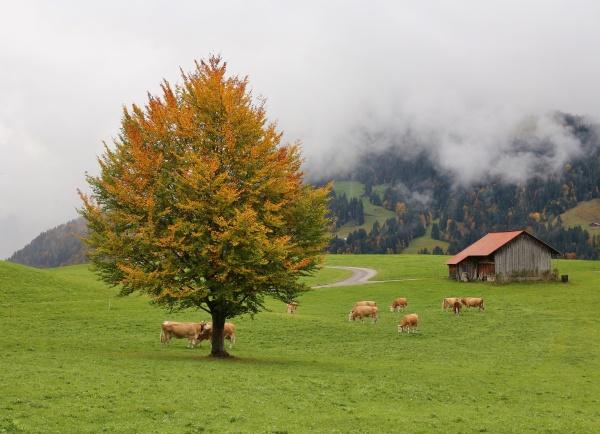 idyllic autumn scene in gstaad swiss