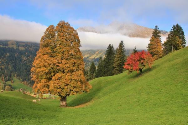 autumn scene near gstaad