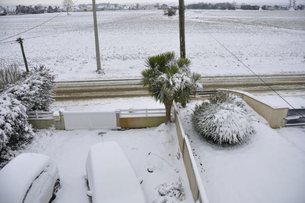 garden under the snow in brittany