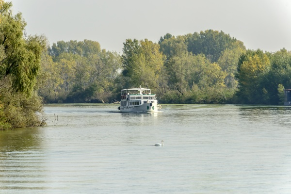 swan and passenger vessel cruising on