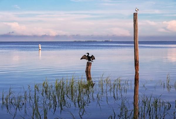 bird on a pole in the