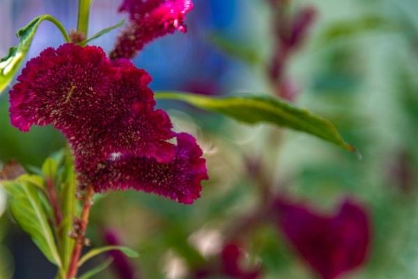 colorful garden flowers on blurred background
