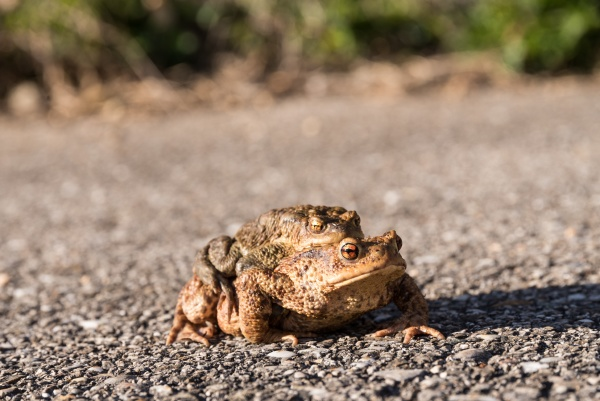 toad on a hike