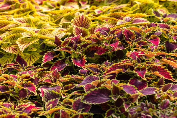 floral carpet of red and green