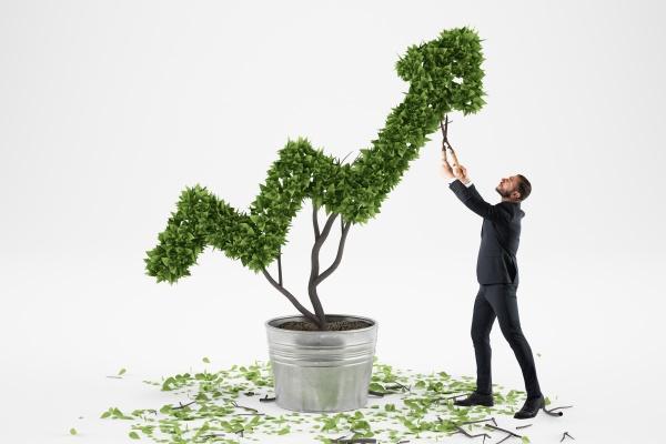 businessman cares for a big plant