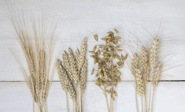 various crops rye barley wheat oats